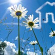Stock Photo: A nice Closeup Flowers-Shot with a House in the sky. Concept for real estate business and family home safety