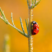 Hard way our Ladybird — Stockfoto
