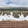 Stock Photo: Sand bag and barrier for prevent flood