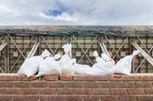 Sand bag and barrier for prevent flood — Stock Photo