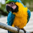 The Parrot - Stock Photo