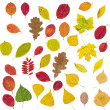 Set of different autumnal leaves — Stock Photo