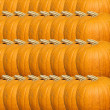 Pumpkin texture - Stock Photo