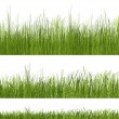 Green grass pattern on white background — Stock Photo