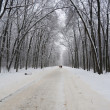 White winter landscape with forest road — Stock Photo