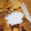 Stock Photo: Frame from autumn leaves