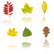 Set of different autumnal leaves - Stock Photo