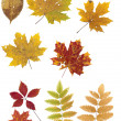 Autumn leaves on a white background. — Stock Photo #17677199