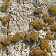Moss and lichen on stone — Stock Photo #17677769