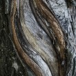 Bark of a tree an willow - Stock Photo