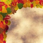 別の紅葉 — ストック写真