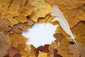 Frame from autumn leaves — Stockfoto