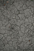 Soil with drying crack — Stock Photo
