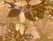 Old paper autumn background — Stock Photo