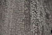 Cracked earth on road — Stock Photo