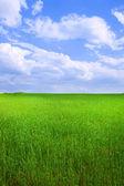 Bereich der gras und himmel — Stockfoto