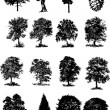 Vector illustration of trees black silhouettes - Stock Vector