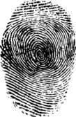 Fingerprint black on white vector illustration — Stock Vector