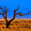 Tree in desert — Stock Photo
