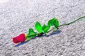 Rose och vägen — Stockfoto