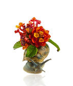 Grape snail in flowers — Stock Photo