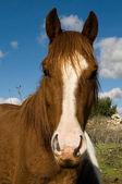 Horse's curiosity — Stock Photo