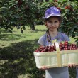 Girl with basket full of cherries — Stock Photo #29357431