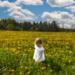 In meadow of yellow flowers — Stock Photo #29357493