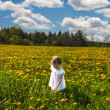 Stock Photo: In a meadow of yellow flowers