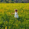 Stock Photo: On the field of dandelions