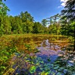 Small lake in forest — Stock Photo #29357905