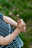 Former dandelions — Stock Photo