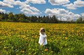In a meadow of yellow flowers — Stock Photo