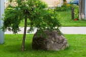 Large boulder near the tree — 图库照片