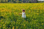 On the field of dandelions — Stock Photo
