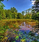 Pequeno lago na floresta — Foto Stock