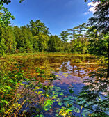 Small lake in the forest — Stock Photo
