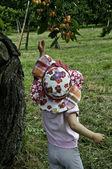 Yellow cherry — Stock Photo