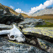 Skull in the mountains - Stock Photo