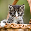 Stock Photo: Little cat