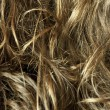 Curly blond hair - texture — 图库照片 #22967816