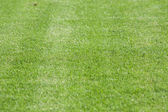 The line on the grass on the football pitch — Stock Photo