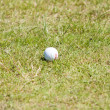 Balls for playing golf on grass — Stock Photo