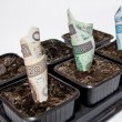 Planted Polish money - profit — Stock Photo
