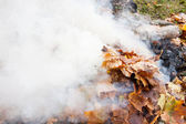 Burning of old leaves in the park — Stock Photo