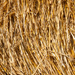 Golden hay bale collected — Stock Photo