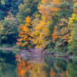 Colorful trees in autumn — Stock Photo