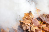 Burning of old leaves in the park — Foto Stock