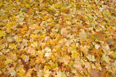 Autumn leaves in the forest. — Stock Photo