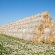 Gathered hay bales in a field — Stock Photo #39527877